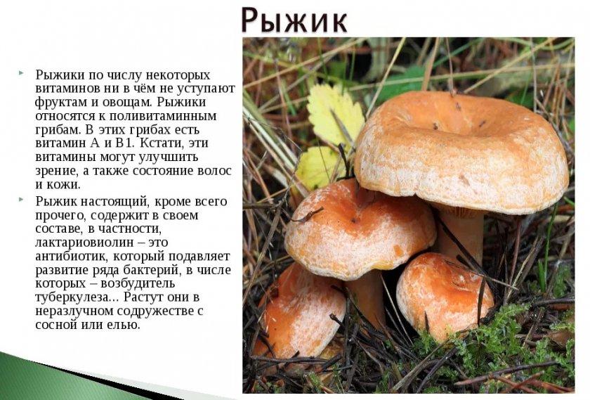Польза гриба
