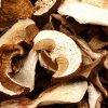 Гриб козлёнок (Suillus bovinus) фото и описание