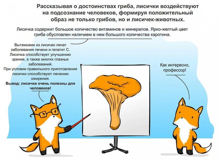 Полезные свойства лисичек
