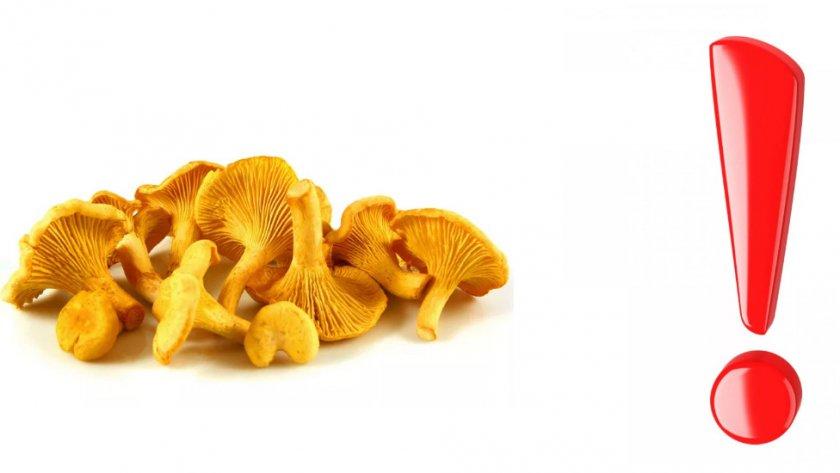 Вред и противопоказания грибов
