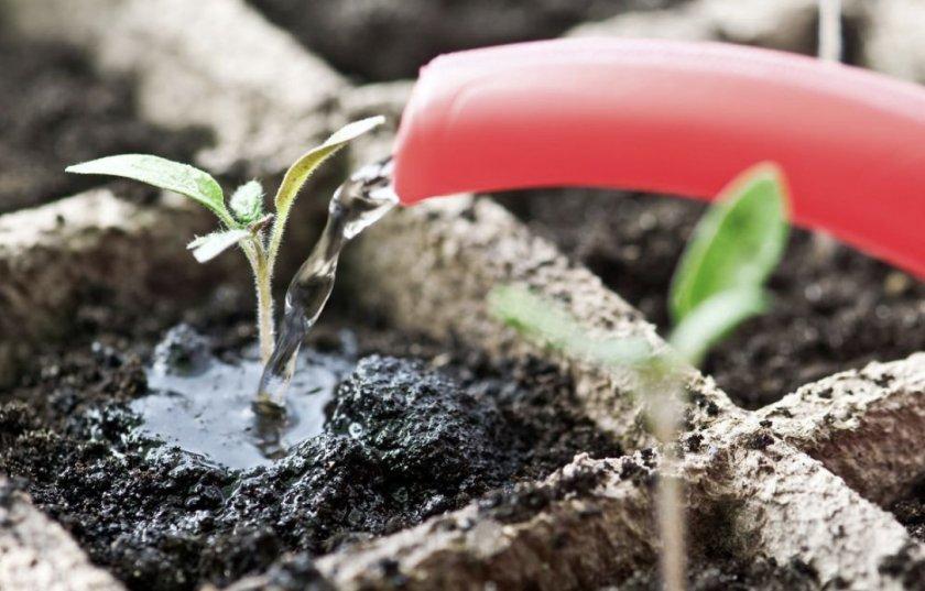 Удобрение рассады