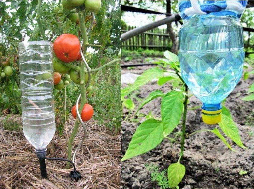 Капельный полив помидоров