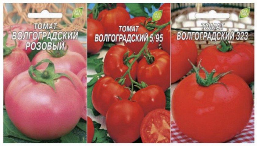 Томат Волгоградский