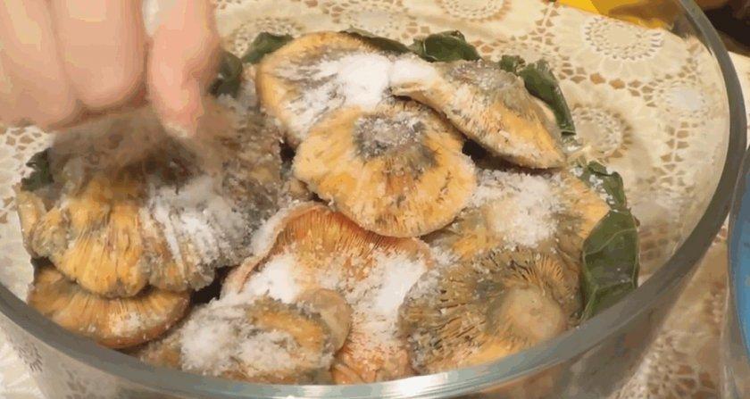 рецепт как солить рыжики
