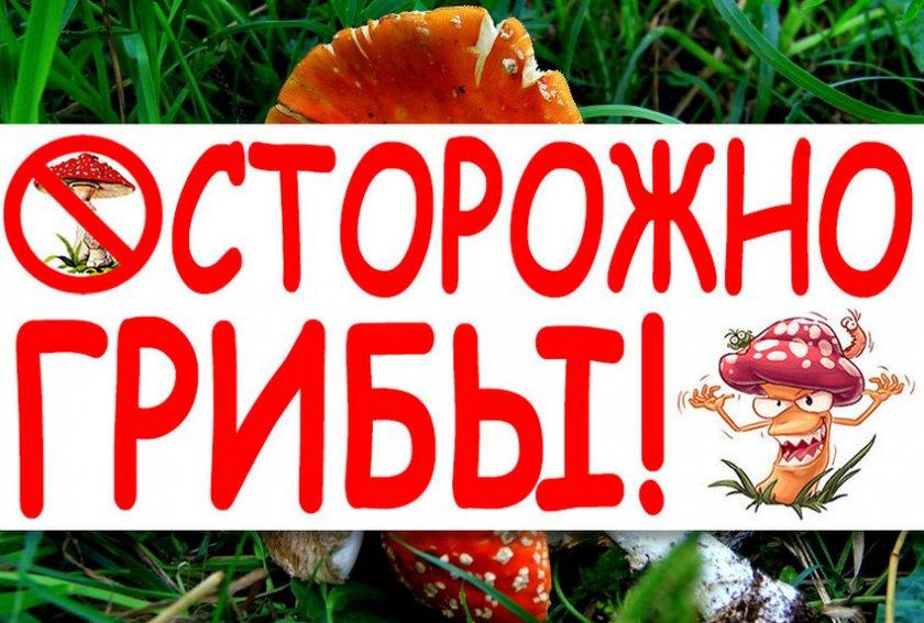 Причины отравления грибами