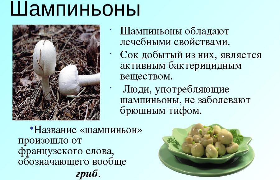 есть ли хитин в грибах