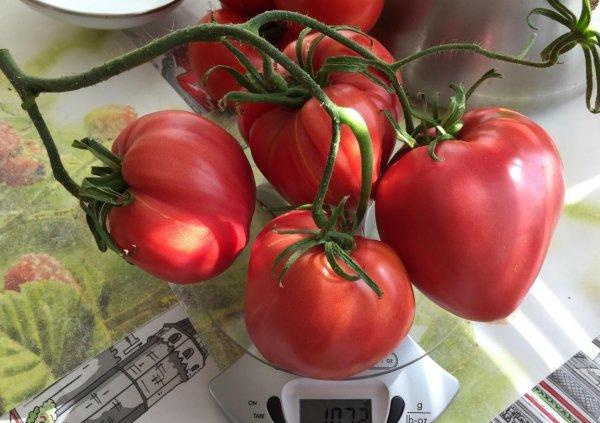 Томат Малиновое чудо - фото, описание сорта, отзывы огородников