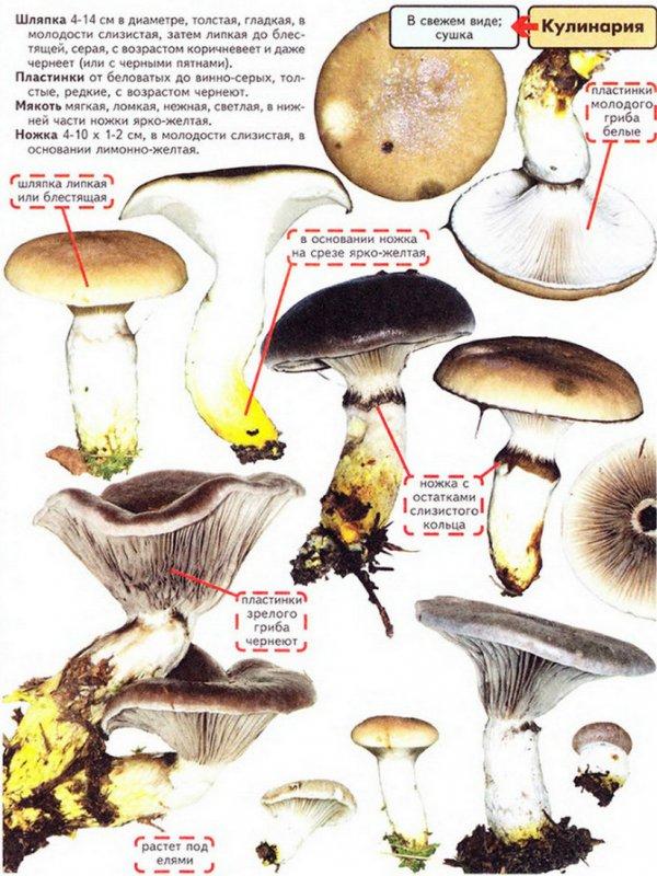 должны перепончатые грибы с описанием и фото комплект снаряжения, который