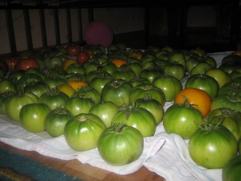 Хранение зелёных томатов