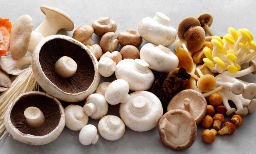 Разные виды грибов