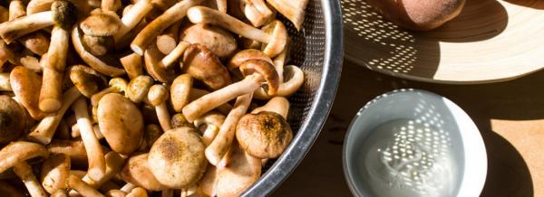 Сколько жарить опята на сковороде в духовке гриле и мангале