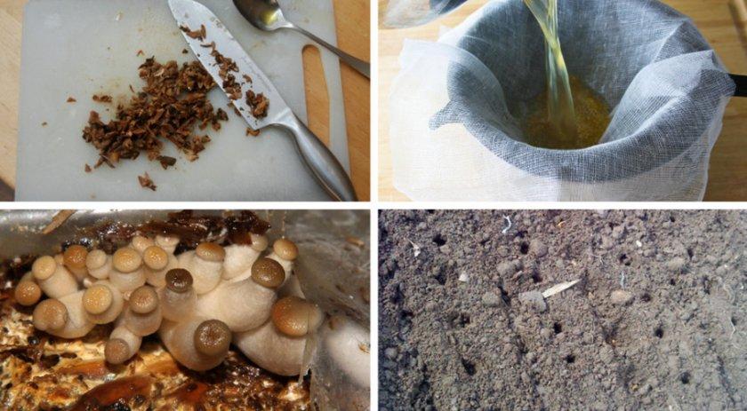 Посадка грибов