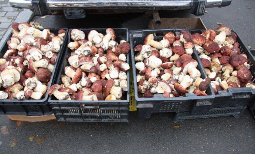 Белые грибы на продажу