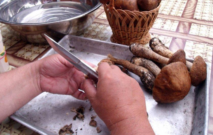 Подосиновик как чистить и готовить