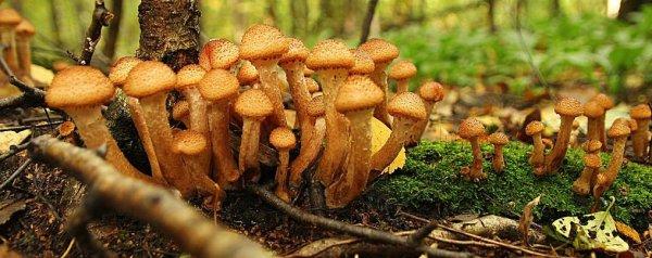До какого числа растут грибы осенью