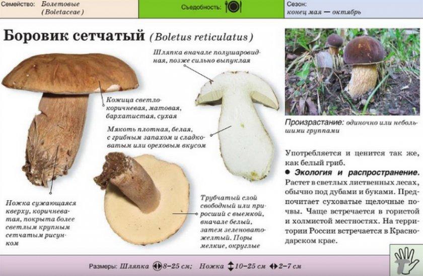 или разновидности белого гриба фото и описание могут позагорать собственном