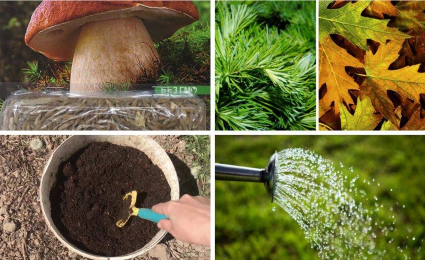 Схема посева мицелия