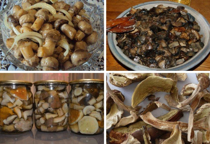 Применение грибов в кулинарии