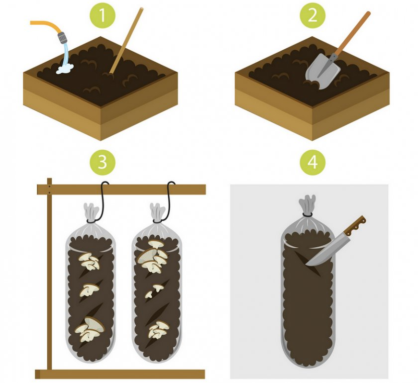Как выращивать грибы в мешках