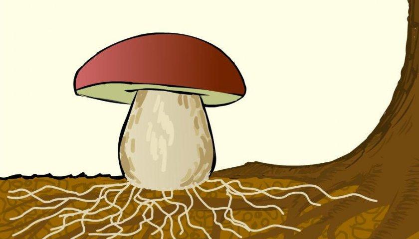 Симбиоз грибов с деревом