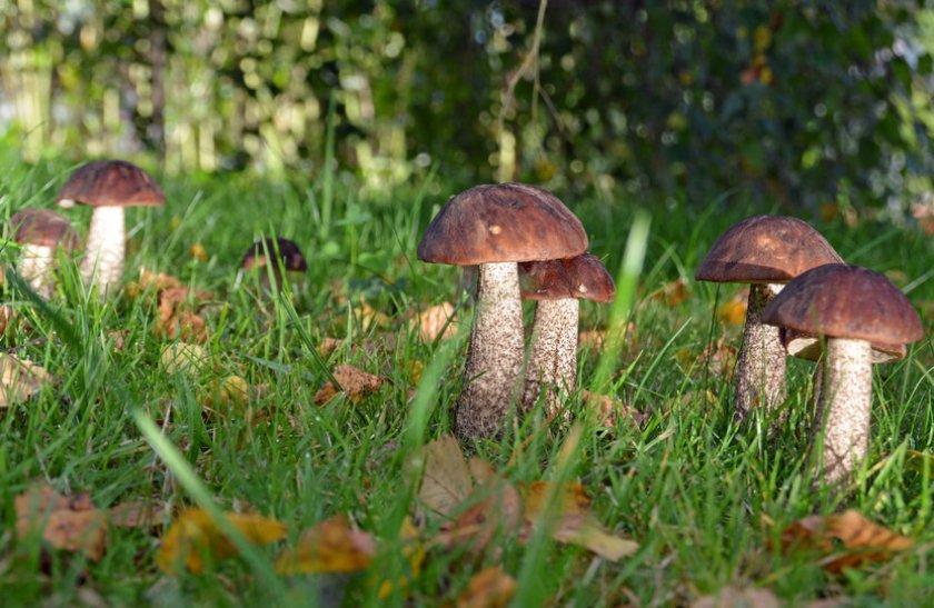Группа грибов
