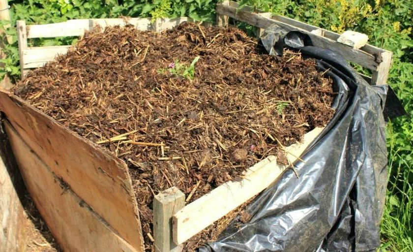 Приготовление компоста для шампиньонов