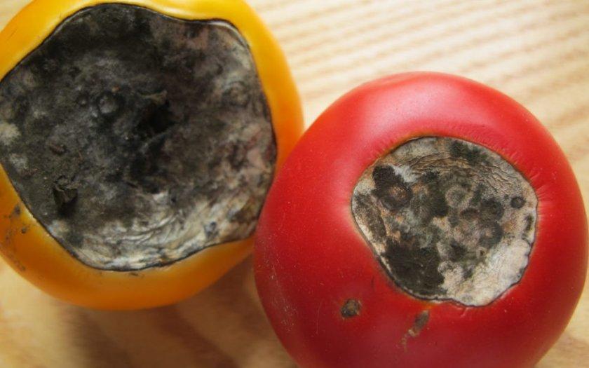 Вершинная гниль на томатах