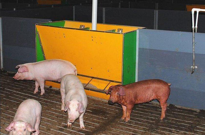 Постоянная кормушка для свиней