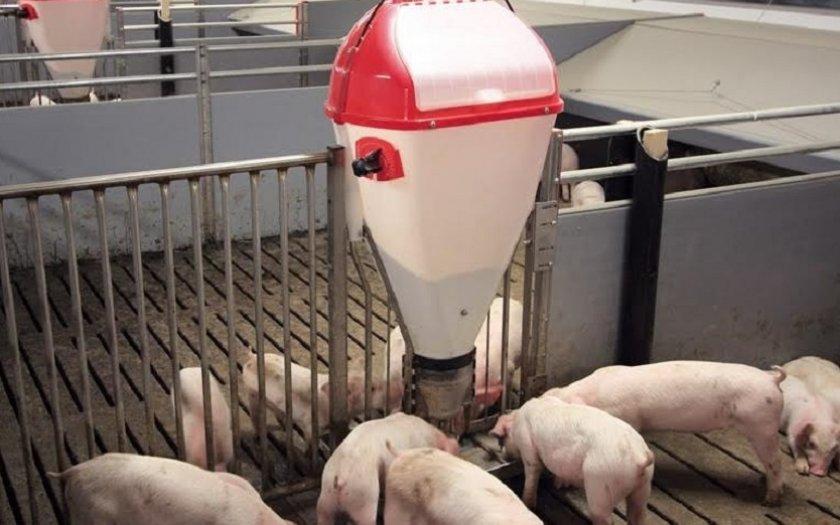 Групповая кормушка для свиней