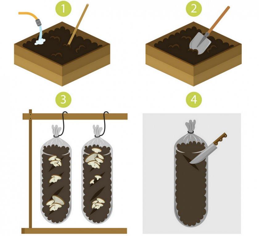 Выращивание вёшенкок в мешках