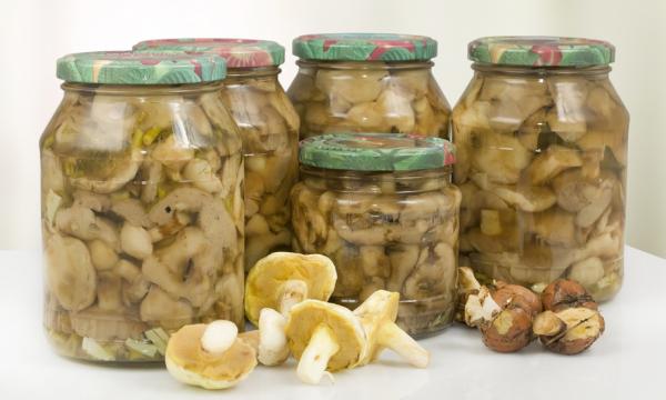 Как солить маслята в домашних условиях – 5 пошаговых рецептов