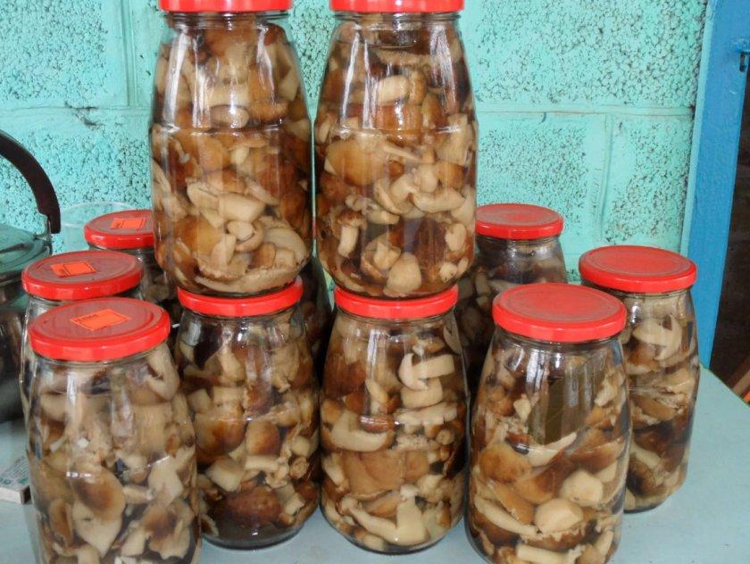 Как мариновать грибы валуи на зиму, пошаговый и простой рецепт