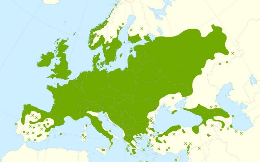 Лещина в Европе