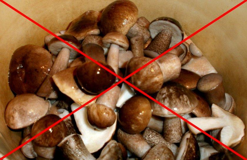 Противопоказания к употреблению грибов
