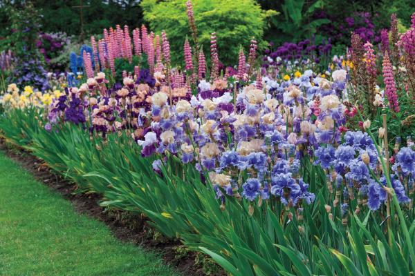 Как правильно сочетать цветы в букете