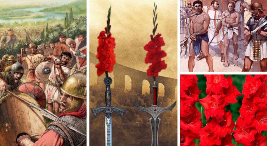 Легенда о гладиолусах
