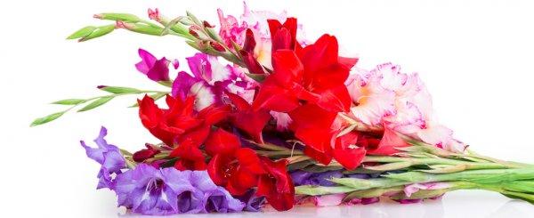 Гладиолусы после цветения что делать: когда выкапывать, как ухаживать