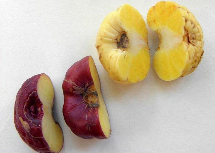 Разрез луковицы