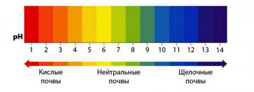 Определение кислотности грунта