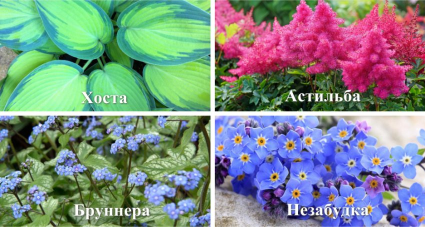 Растения для продления декоративности клумбы