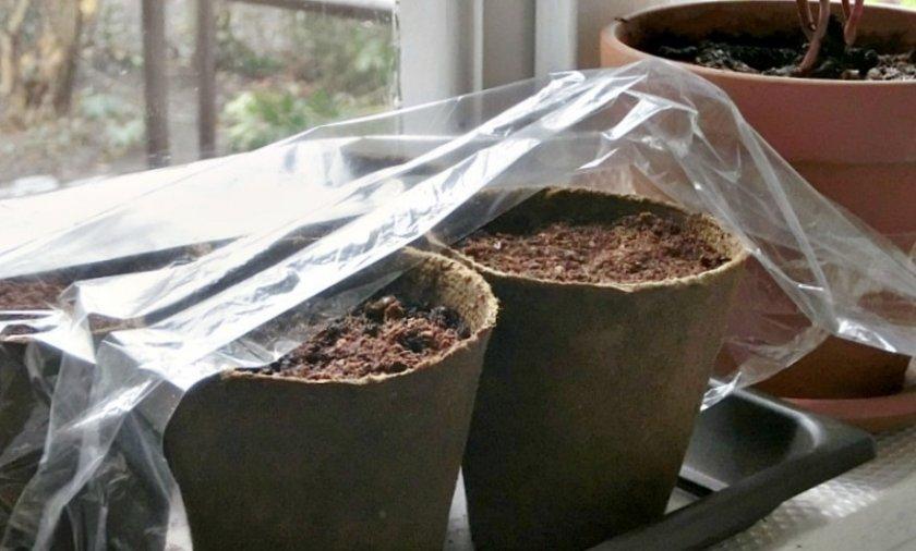 Посев семян под пленку