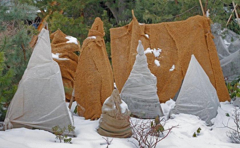 Утепление растений на зиму