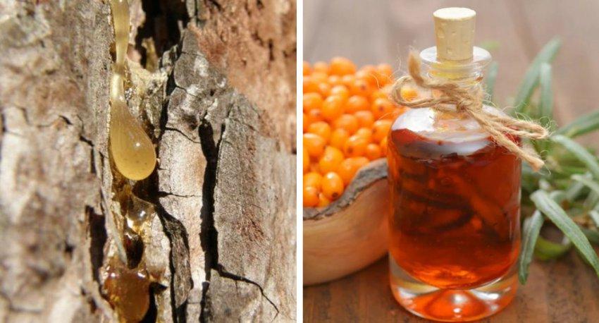 Сосновая смола и масло облепихи
