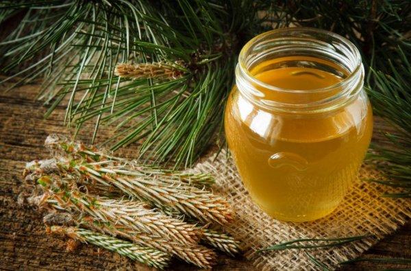 Мед из сосновых почек. Эликсир здоровья и мед из сосновых почек.