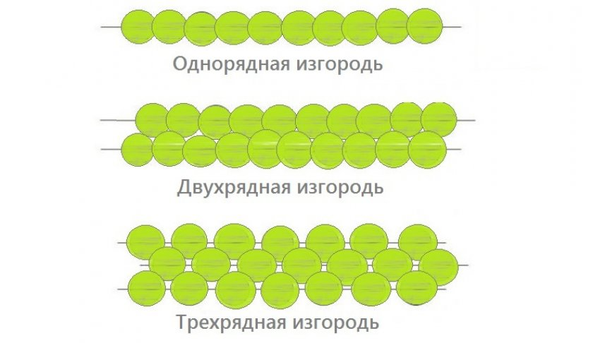 Типы живой изгороди