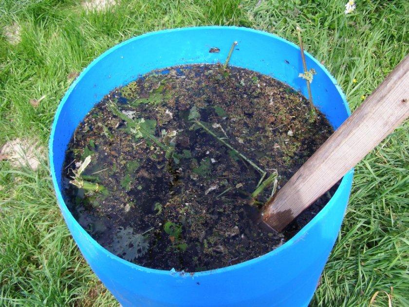 Травяной настой для удобрения свеклы