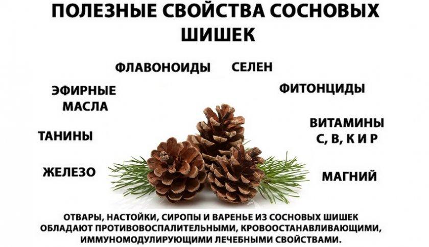 Полезные свойства и состав шишек сосны