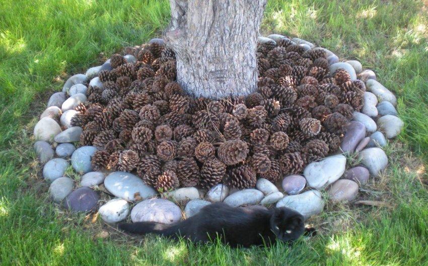 Использование сосновых шишек для мульчирования деревьев