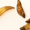 Кедровый стланик 38 фото описание низкой сосны стланиковой Особенности ее посадки и секреты ухода за сосной