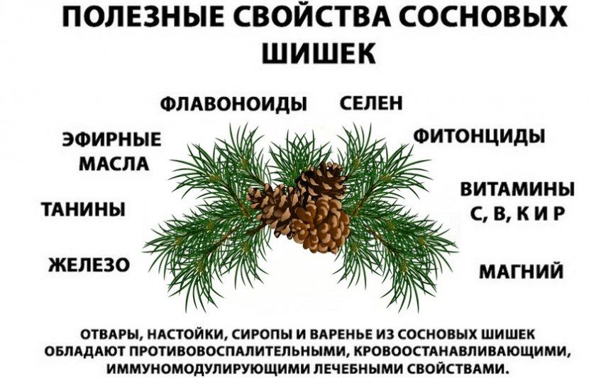 Полезные свойства сосновых шишек